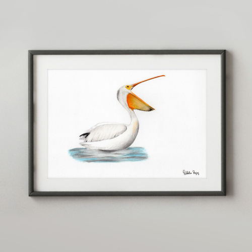 drawing of American White Pelican.