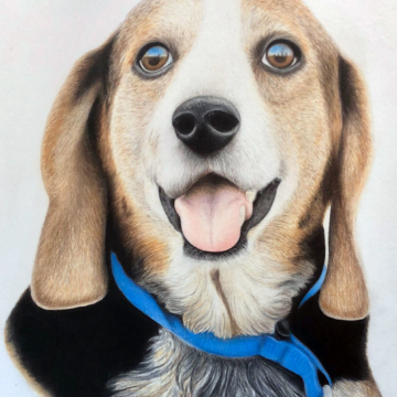 color pencil drawing of a dog
