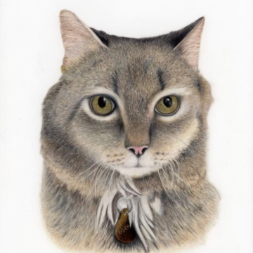 drawing of Oscar the cat